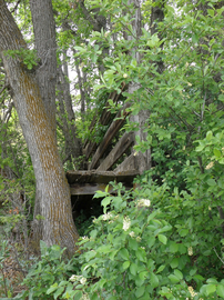 Lucas Homestead Cattle Chute_LindaPohle.