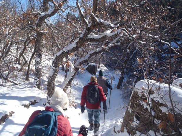 Winter Hike in the Scruboak