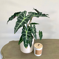 Plant & Candle Combo