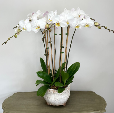 Made-to-Order Orchids
