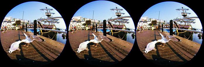 two_fighting_gulls.jpg