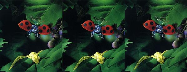 Bug image by Noel Archambault.jpg