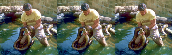 Russ Allen's Reptile Institute by H.C. M