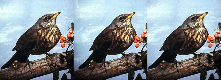 Pat Whitehouse bird on a branch.jpg
