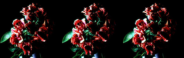 1984 Roses for a Sunday Morning by Tony Alderson.jpg
