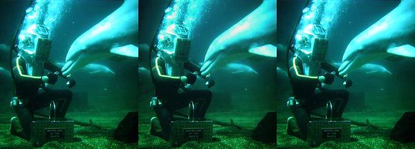 Feeding the  dolphin underwater at Marin