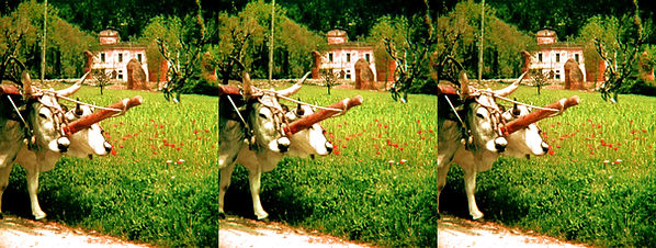 Oxen by Karl Struss.jpg