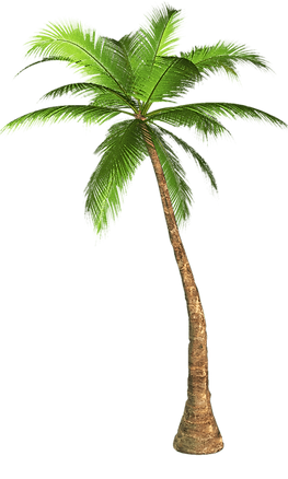 palm-tree-transparent-background.png