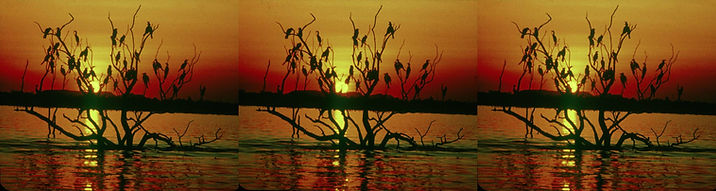 Anhinga Roost No 1 by Allan Griffin.jpg