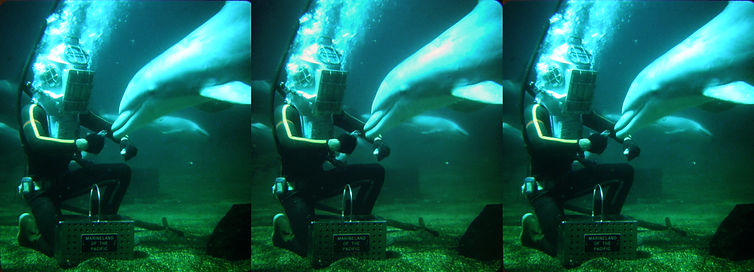 Feeding the dolphins underwater at Marin