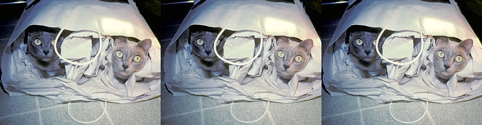 Beatrice & Phoebe playing in the bag cro