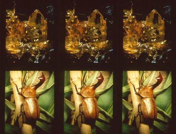 Bonnet Lab Lenticular Images 4.jpg