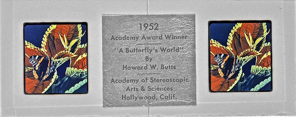 1952 Academy Winner  - A BUTTERFLIES WOR