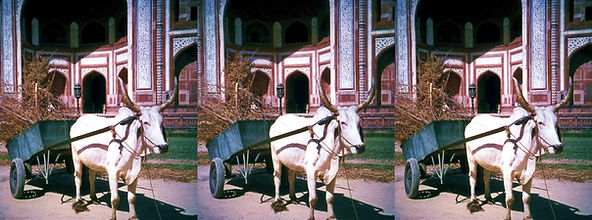 IN-4_India_by_James_and_Rose_Lee.jpg