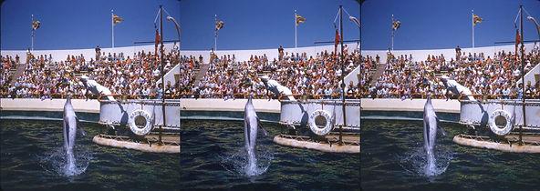 59b Feeding the porpoise at Marineland b