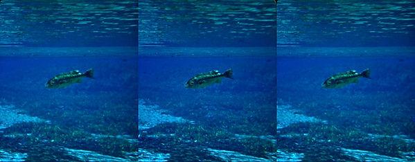 B M Bass Underwater by HC McKay FPSA.jpg