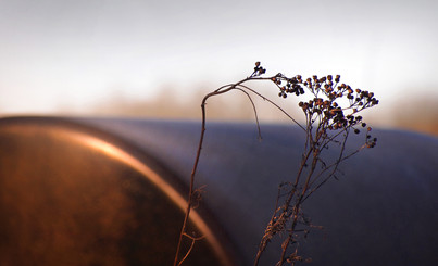 Natur 09.jpg