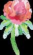 ADS_SummertimeBlossoms_WildflowerStem3.p