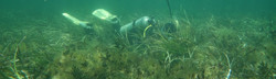 seagrass_edited