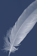 feather-14674_640_blue fade.jpg