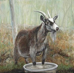 the old goat in water flash jpg.jpg
