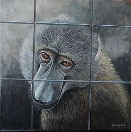 incarcerated  baboon Lake Tobias.jpg