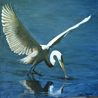 Egret diving at Wildwood Lake 9 16.jpg