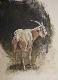 old goat.jpg