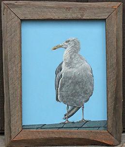 Maine Gull.jpg