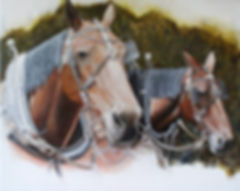 carriage horses 1.jpg