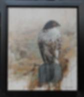 hawk Trindle Hawk w frame.jpg