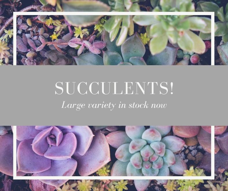 Succulents in stock WEB.jpg