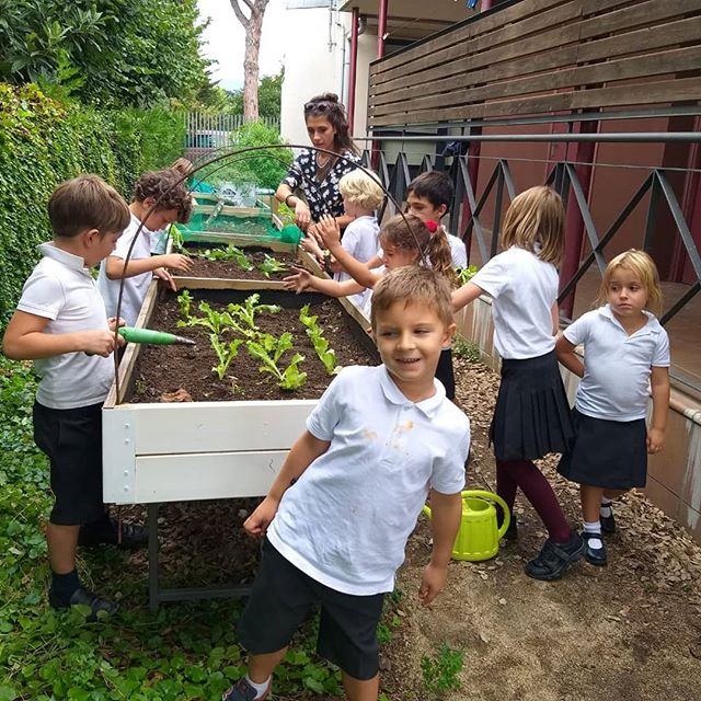 We have started the vegetable garden sea