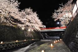 飛騨神岡夜桜夜市