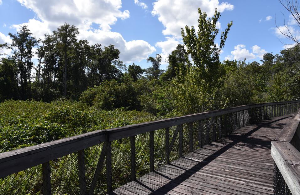 A boardwalk through nature - Peghorn Par