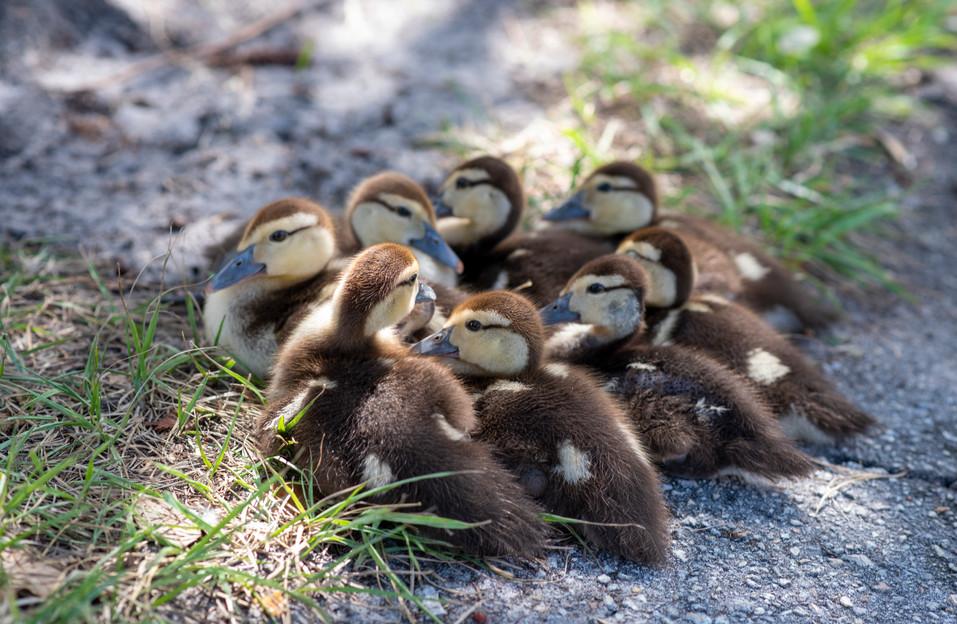 Thriving wildlife