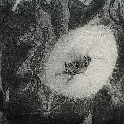 Bindweed, etching, 8 x 8cm