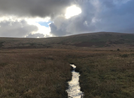 The watery veins of the moor