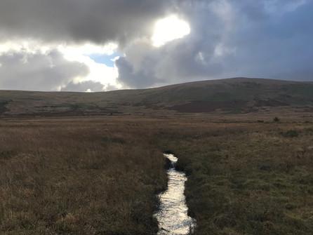 The watery veins of the moor