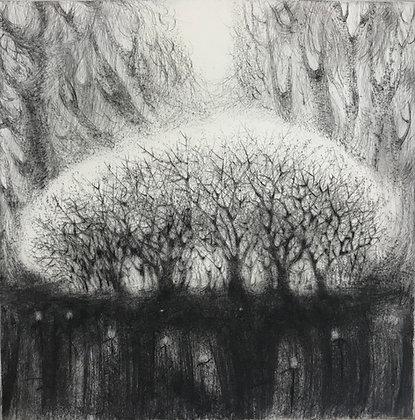 Blackthorn, drypoint, 16 x 16cm