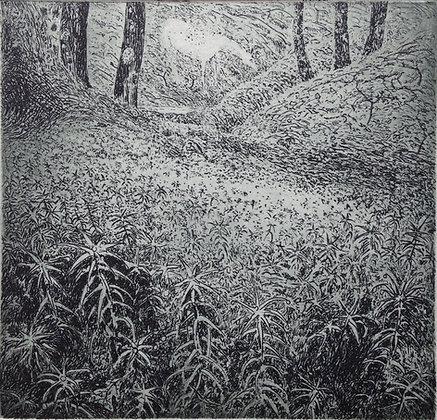 Moss, etching, 9 x 9cm