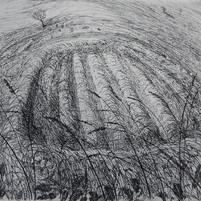 Small hayfield, skylark singing