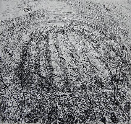 Small hayfield, skylark singing, etching, 9 x 10cm