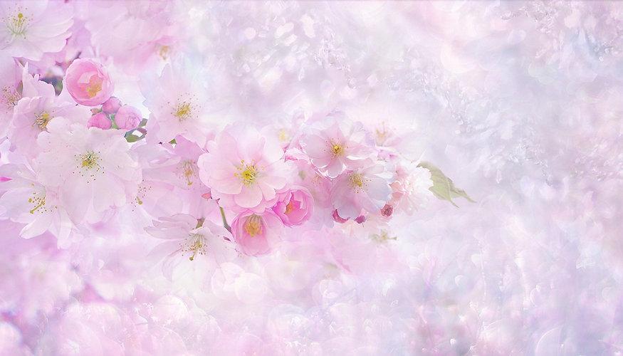 桜 薄ピンク.jpg