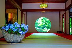 鎌倉アジサイ.jpg