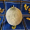 Cantalope Melon