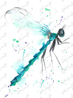 Dragonfly Side