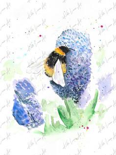 Bee & Ceanothus