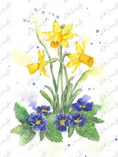 Daffodils & Primroses