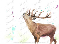 Side Stag